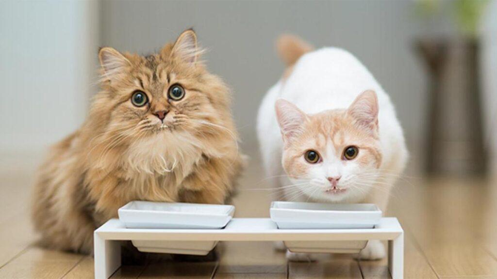 Hal yang Harus Diperhatikan Saat Memilih Jenis Makanan Kucing